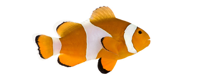 peixos_1